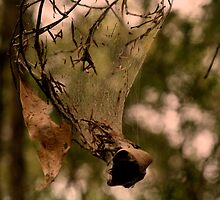 Funnel Web by myraj