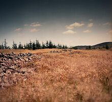 Grasses and Skye, Old Fort, Wallace Trail, Cardrona Woods, Scottish Borders by Iain MacLean