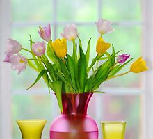 garden window and tulips.. by JOSEPHMAZZUCCO