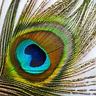 Peacock Feather by Paul Earl