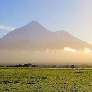 Good Morning Taranaki by KateMatheson