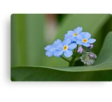 Forget-me-not on green Canvas Print