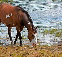 Paint Horse by BCkat