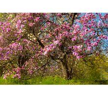 On Magnolia Hill Photographic Print