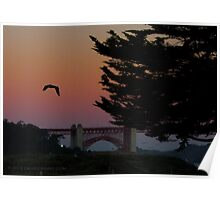 Pelicans in the Morning light Poster