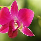 lovely orchid by ANNABEL   S. ALENTON