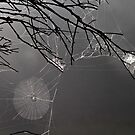 Spider webs by pennyswork