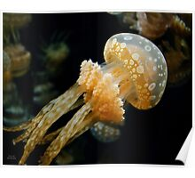 Mushroom Jellyfish Poster