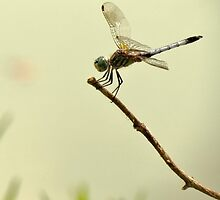 Dragon Fly on a Steeeek by Ron Russell
