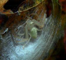 White Spider (8850) Sticker