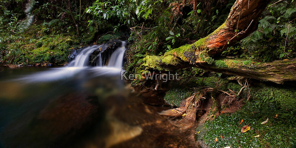 Old Kaimai trunk by Ken Wright