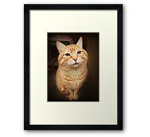 I Know, I Know, I am the Cutest Kitty in the Whole World.  Framed Print