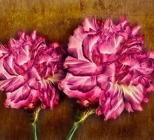 Carnations by Keri Harrish
