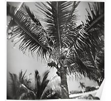 Palm Tree in the Ocean Wind Poster