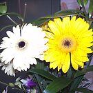 Flower duet by AmandaWitt