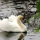 The Ugly Duckling  by wanderingtrucki
