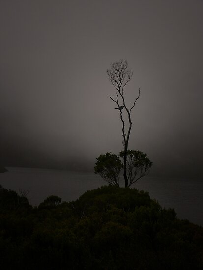 Lonely Shrub by Josie Jackson