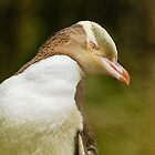 Yellow-eyed Penguin - New Zealand by Kimball Chen