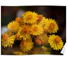 Yellow Paper daisy Poster