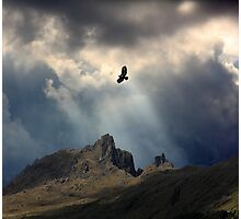 And I Soar. Photographic Print