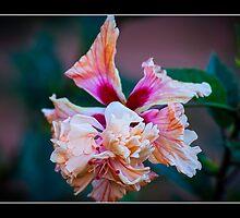 Flower by nixworries