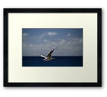 Flying Free Framed Print