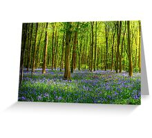 Bluebells in Micheldever Wood Greeting Card