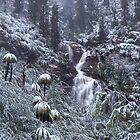 The White Rainforest  by Donovan wilson