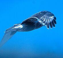 Rough Legged Hawk Flying in the Fog  by Bryan Shane
