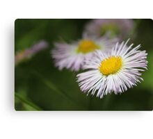 Wetland Wild Flower Canvas Print