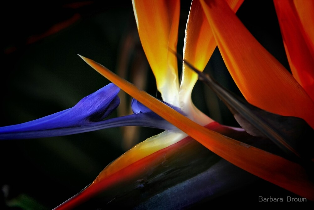 Tropical Colors by Barbara  Brown