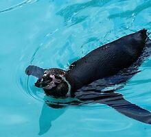 Penguin by Denise Abé