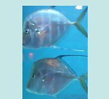 Flat Fish Under the Sea by Virginia-speaks