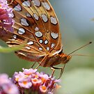 butterfly beauty by katpartridge