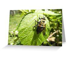 Bumble bee On Rasberry Leaf Greeting Card