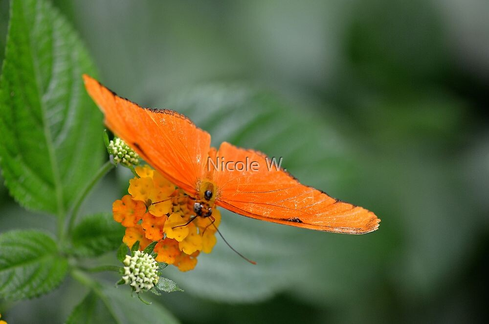 Bright orange butterfly by Nicole W.
