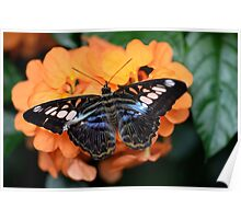Beautifull Butterfly on orange Poster