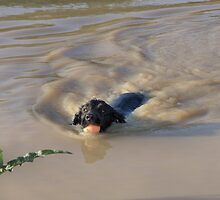 Doggy paddle by JEZ22