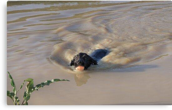 Doggy paddle by JEZ22