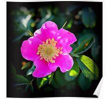 Wild Rose 2 Poster