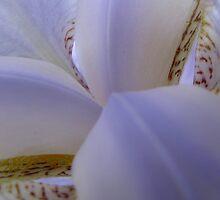 White Lily by phildesjardins