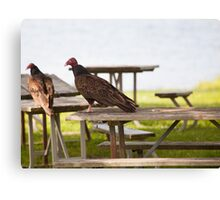 A Vultures Picnic Canvas Print