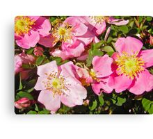 Governor General's Rose 4 Canvas Print