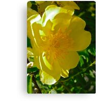 Governor General's Rose 9 Canvas Print