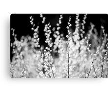 Macro, Spring Leaves, Lindinny Woods, Scottish Borders Canvas Print