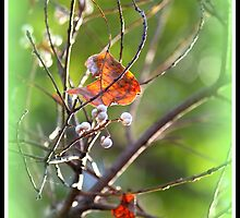 An  Autumn Goodbye by Evita