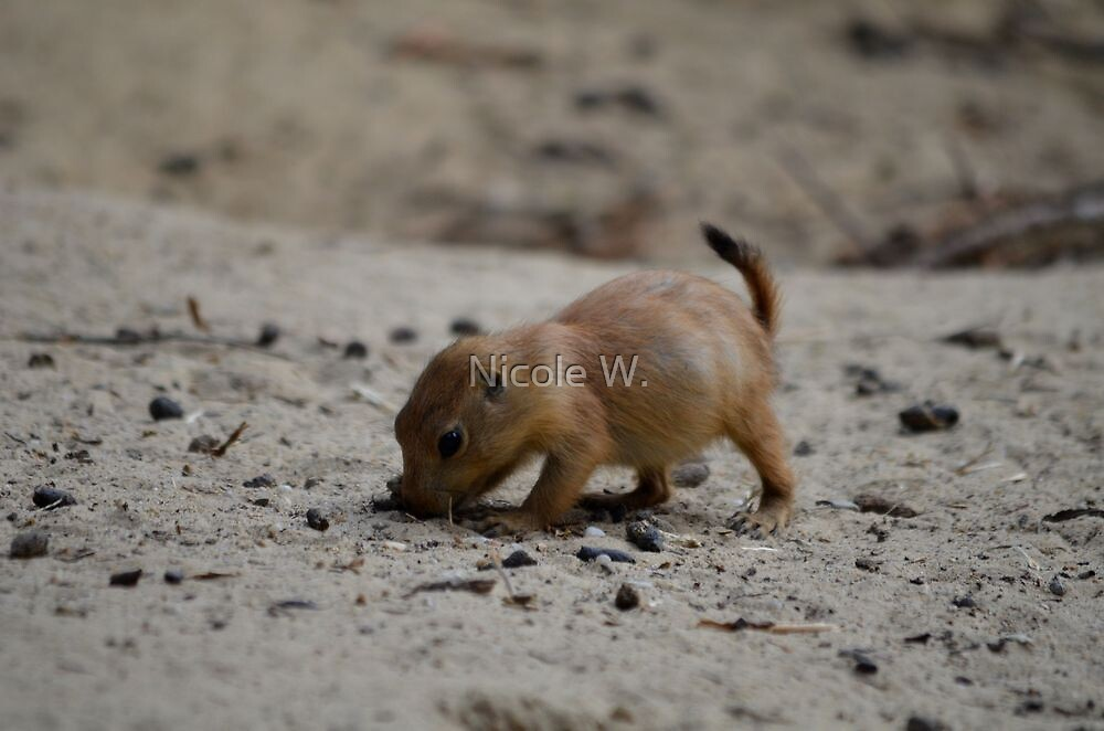 prairie dog baby struggeling by Nicole W.