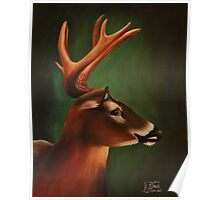 Whitetail Buck Deer Poster