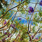 Jacaranda in flower by Thomas Tolkien