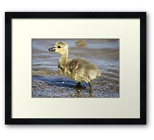 Can someone pass the towel? Framed Print